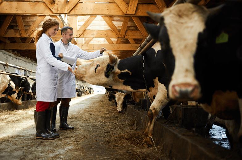 """Pakdemirli, """"Islah programı kapsamında soy kütüğü kaydı tutulan koyun keçi başına 100 lira, soy kütüğünden doğan damızlık koç-tekeleri kullanan yetiştiricilerimize koç, teke başına 500 lira destekleme ödemesi yapacağız."""" dedi."""