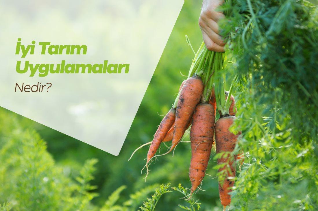 İyi Tarım Uygulamaları Nedir? İyi Tarım Uygulama Destekleri Nelerdir?