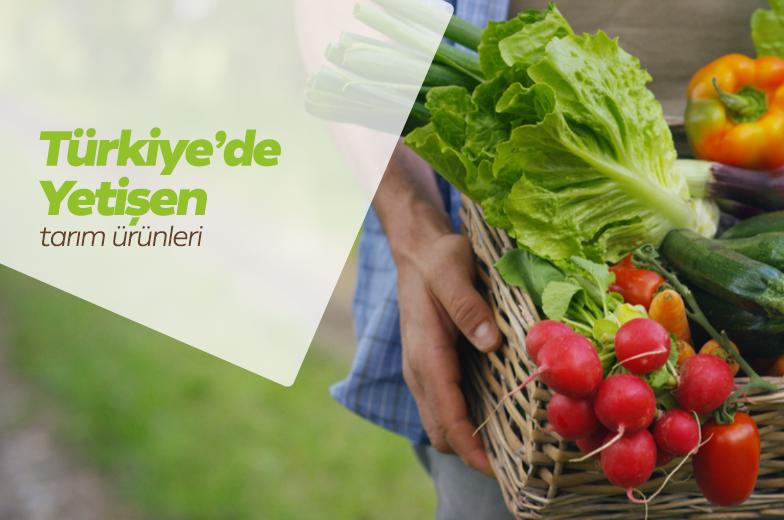 Türkiye'de Yetişen Tarım Ürünleri
